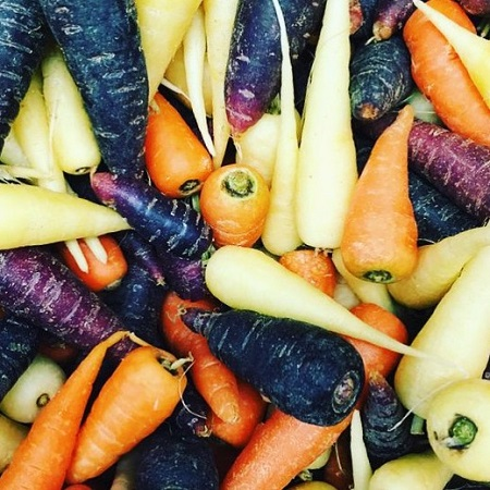 Rainbow Chantenay Carrots