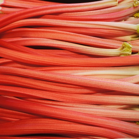 Outdoor Cheshire Rhubarb