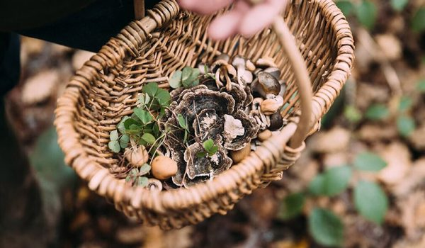 foraging-basket
