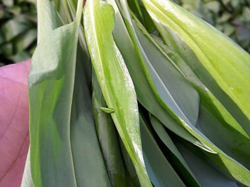 plant-wild-garlic